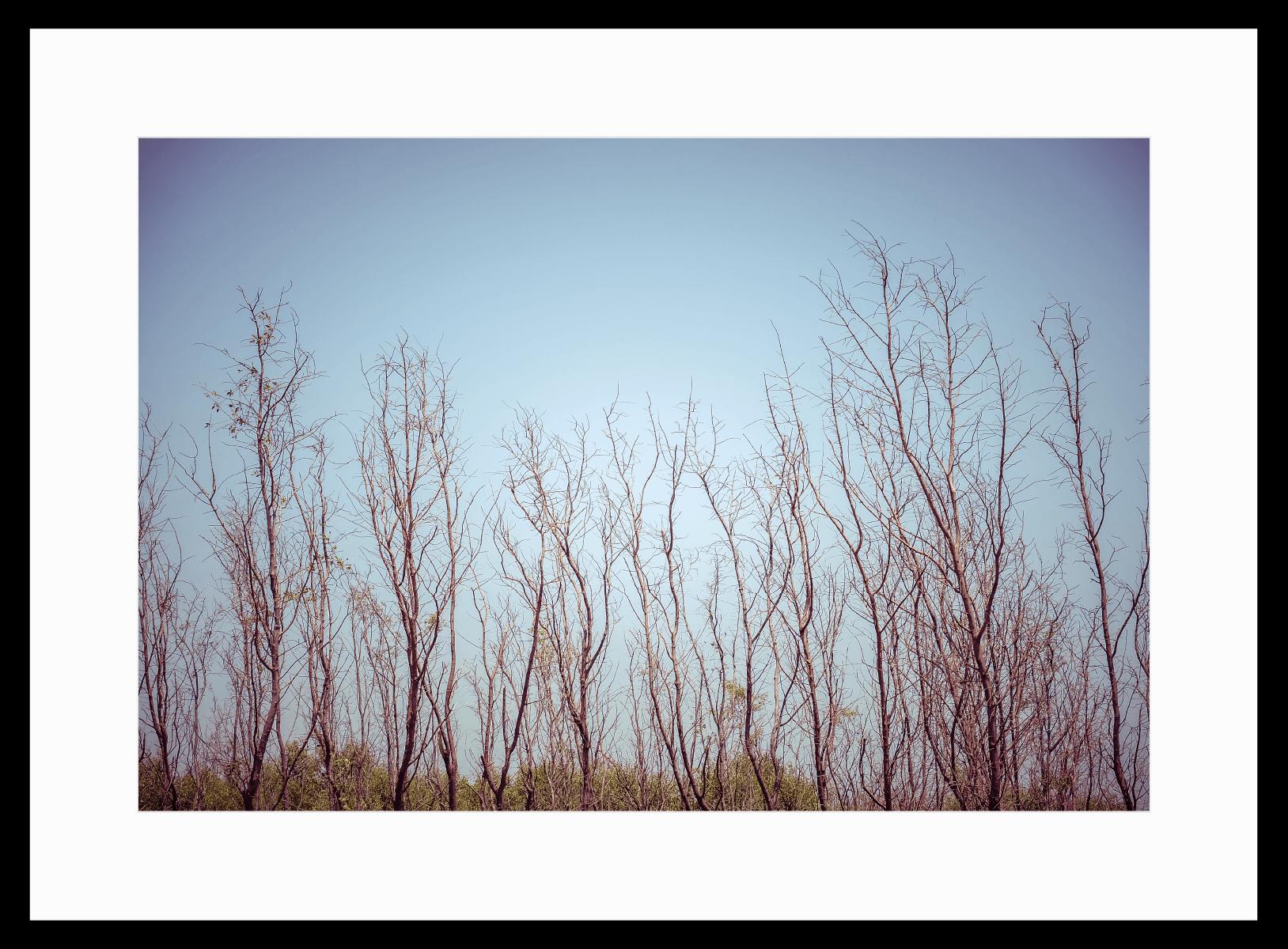 רויאל ביץ, תל אביב